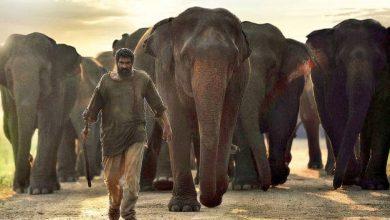Photo of ராணாவின் அதிரடி நடிப்பில் உருவாகும் 'காடன்' படத்தின் டீசர்!